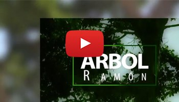 Arbol Ramon-home